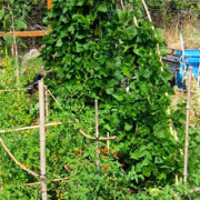 Garden-Blog